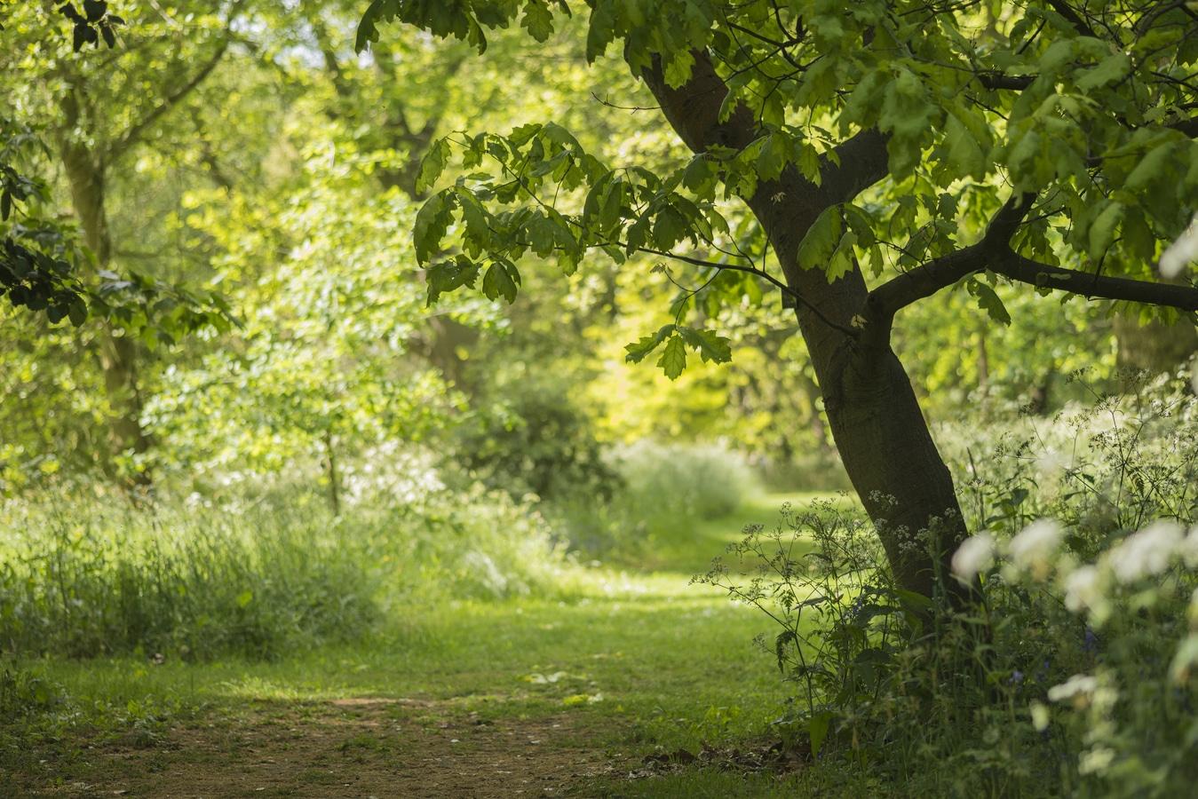 English forest Rheuma Akademie