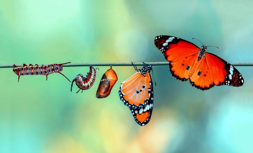 Rheuma Akademie Monarch Butterfly