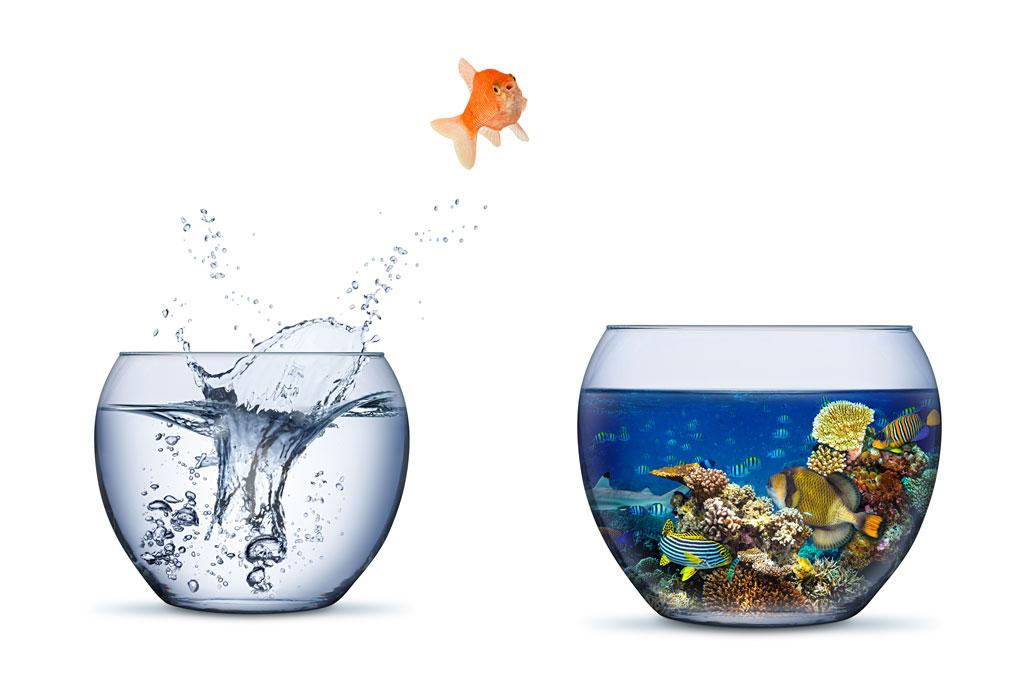 Rheuma Akademie Goldfish jump
