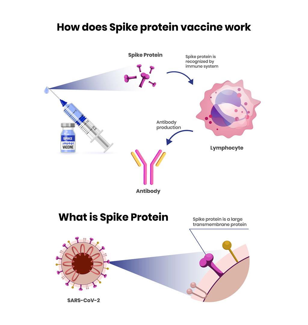 Spike protein vaccine